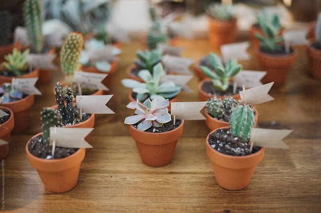 There are many options for party favors for women 50 years, such as succulent vases
